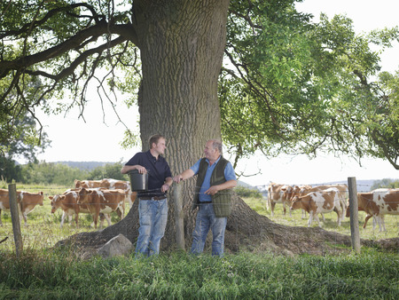 leaning by barrier: Farmer and son with Guernsey calves