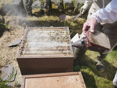 jeopardizing: Opened bee hive