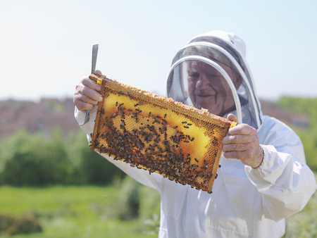 jeopardizing: Beekeeper inspects honey comb LANG_EVOIMAGES