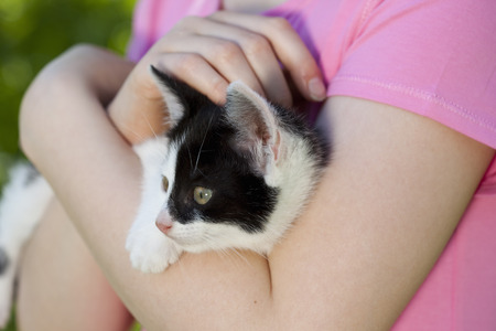 yielded: Close up of young cat