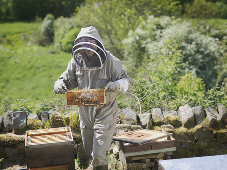 defended: Beekeeper inspect honey combs LANG_EVOIMAGES