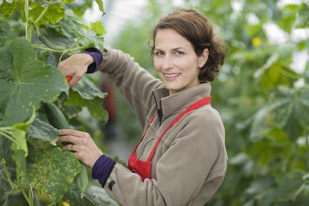 Farming vegetables and fruits LANG_EVOIMAGES
