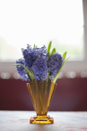 purples: Flowers in vases and an English Garden