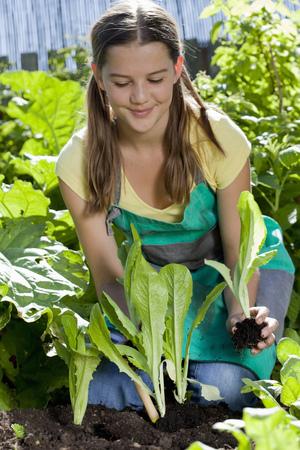 agachado: Muchacha que planta la ensalada en jardín