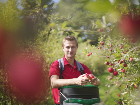 advances: Farmer picking apples in orchard LANG_EVOIMAGES