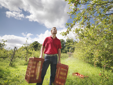 Farmer in orchard with crates