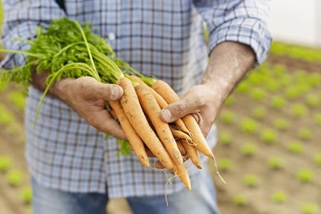 harvested: Farmer LANG_EVOIMAGES