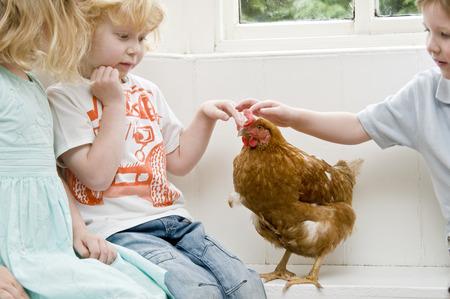 fondling: Children stroking a chicken