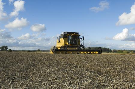 Combine harvestor in wheat field