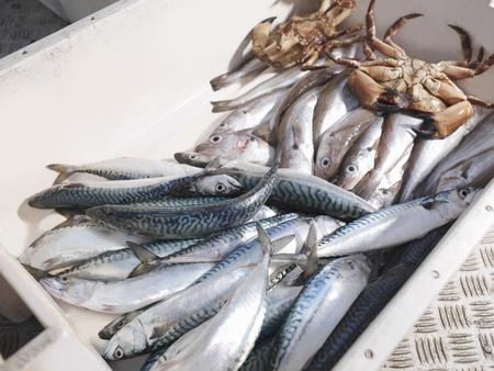 omnivore: Mackerel,haddock and crabs in box
