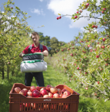 personas reunidas: Farmer picking apples in orchard LANG_EVOIMAGES
