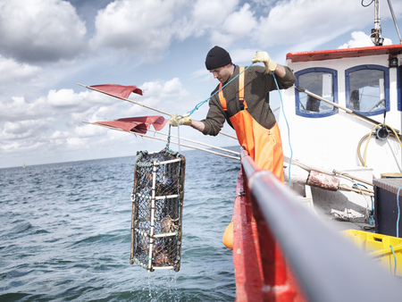 safe water: Fisherman pulling lobster pot with crabs