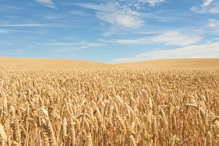 advancing: Field of Crops