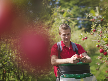 selections: Farmer picking apples in orchard LANG_EVOIMAGES