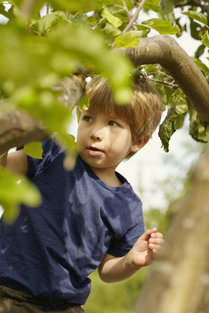 indecisive: Young boy climbing tree