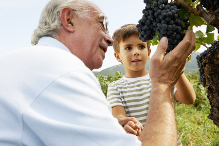 the elderly tutor: Grandfather and child looking at grapes