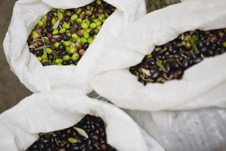 carryall: Olive harvest