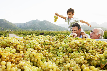 arms lifted up: Generational family looking at grapes