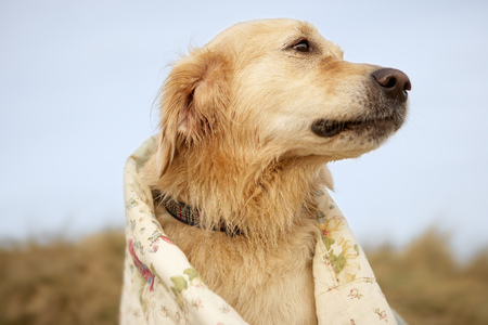 Portrait dog on beach under quilt. Fall LANG_EVOIMAGES