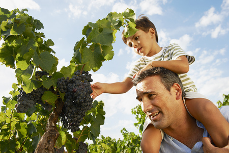 poppa: Father and son looking at grapes