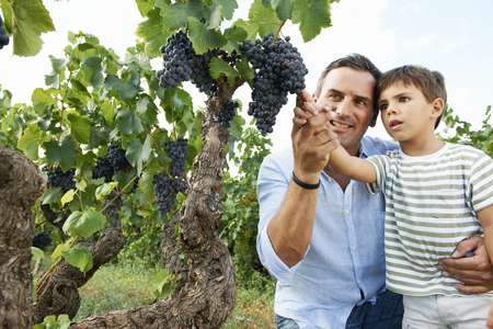 Father and son looking at grapes