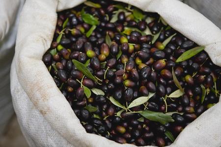 carryall: Bag filled with fresh olives LANG_EVOIMAGES