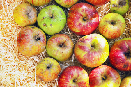 Close up of apples in hay LANG_EVOIMAGES