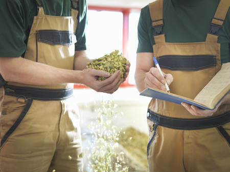 notations: Workers selecting hops in brewery