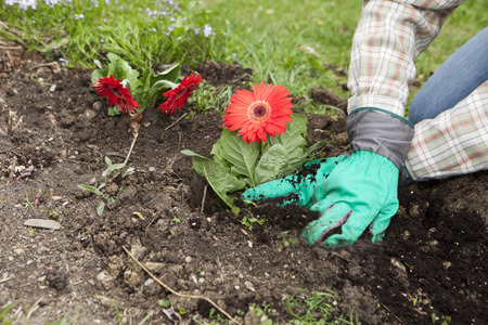 seeding: Man planting flowers
