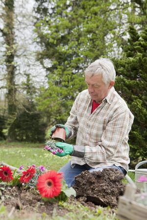 arrodillarse: Hombre mayor plantar flores en el patio trasero