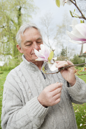 Older man smelling magnolia on tree LANG_EVOIMAGES