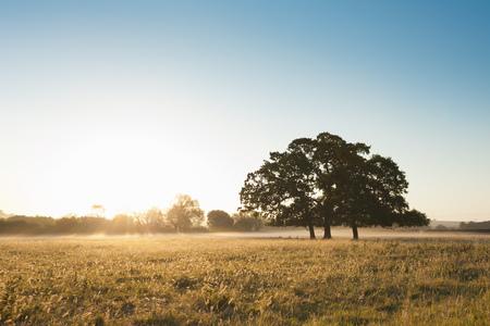mornings: Tree growing in grassy field