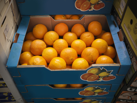 Close up of boxes of oranges LANG_EVOIMAGES
