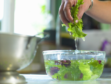 Woman washing lettuce in bowl