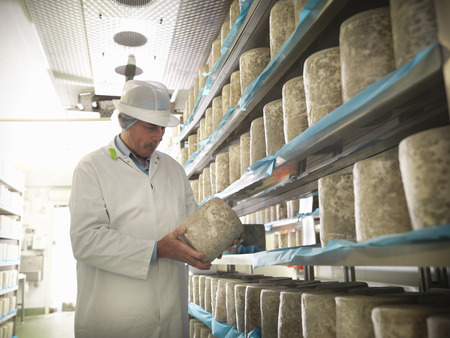 new age: Worker checking blue cheese in factory LANG_EVOIMAGES
