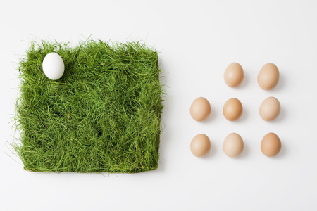 yielding: Eggs with patch of grass