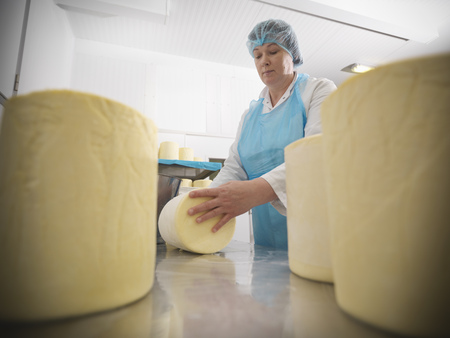 large group of business people: Worker wrapping cheese in factory
