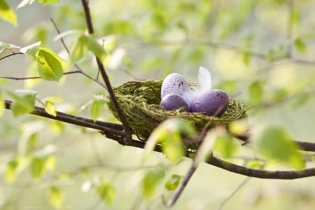 Speckled eggs in bird's nest