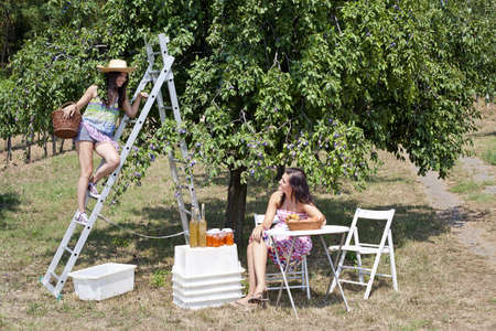 flogging: Women picnicking in orchard