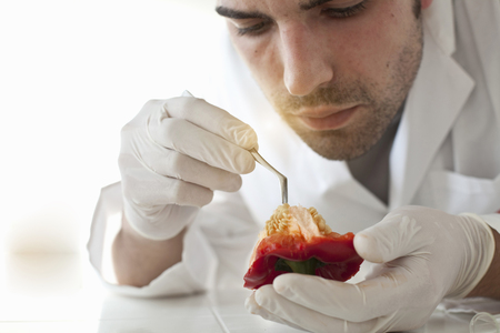 advances: Scientist examining seeds of bell pepper LANG_EVOIMAGES