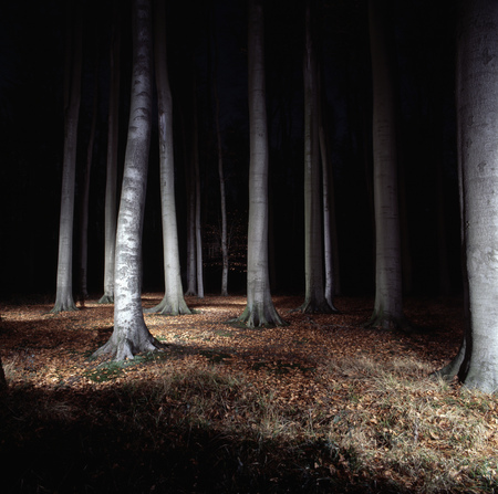 haunt: Trees in forest lit up at night LANG_EVOIMAGES