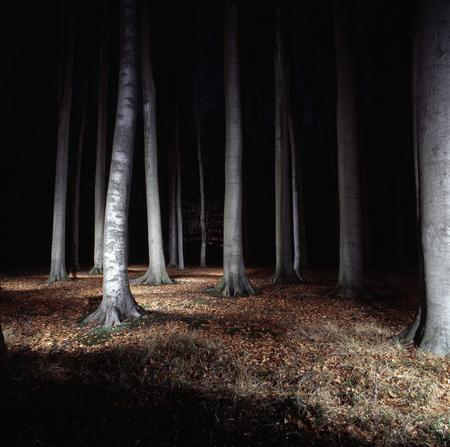 supernatural: Trees in forest lit up at night LANG_EVOIMAGES