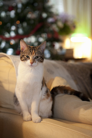 Cat sitting on couch in living room LANG_EVOIMAGES