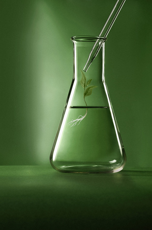 droppers: Plant growing in graduated cylinder LANG_EVOIMAGES