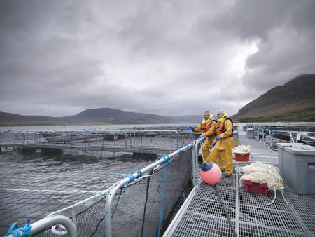 omnivore: Workers talking at fish farm