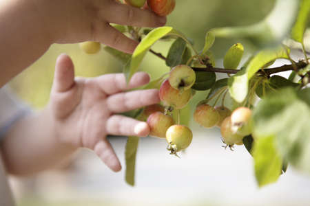 reaches: Toddler picking fruit off plant