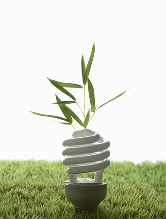resourceful: Fluorescent light bulb in grass LANG_EVOIMAGES