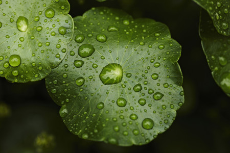 advances: Close up of water droplets on leaf