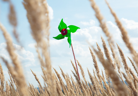 Pinwheel standing in wheatfield