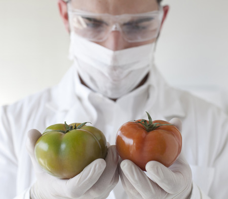 Scientist examining tomatoes in lab LANG_EVOIMAGES